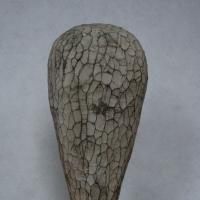 Schalenamöbe